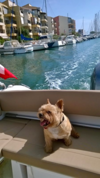 Teds, enjoying a speed boat trip.