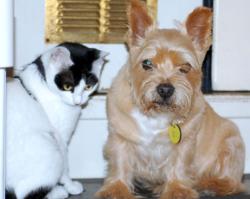 Cohabitation - Coco and Teddy