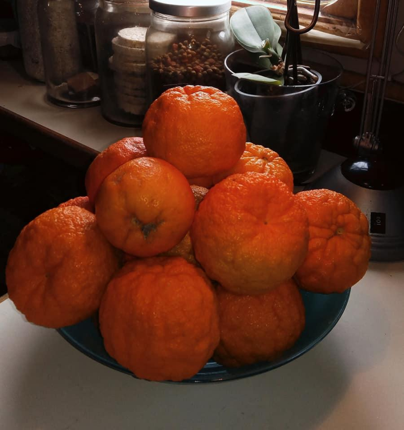 Saville Oranges for Lucie's marmalade